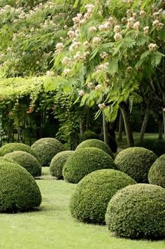 topiary boxwoods and mimosa trees make a great statement in this formal garden Plants, Beautiful Gardens, Dream Garden, Landscape, Outdoor Gardens, Boxwood Garden, Garden Design, Garden Landscaping, Topiary Garden