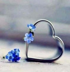 ❥●❥ ♥ ❤ Forget me not heart ❤. I Love Heart, With All My Heart, Happy Heart, Your Heart, Heart In Nature, Heart Art, Heart Wallpaper, Love Wallpaper, Heart Images