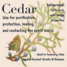 Herbalism   Magical properties of #Cedar