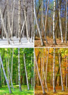 Winter Spring Summer Fall - Set of Four Painted Pixels Art Photograph Metallic Canvas PRINTS - Made by on ETSY Autumn Art, Autumn Summer, Cross Paintings, Tree Paintings, Winter Springs, Four Seasons, Beautiful Images, Pixel Art, Cool Photos