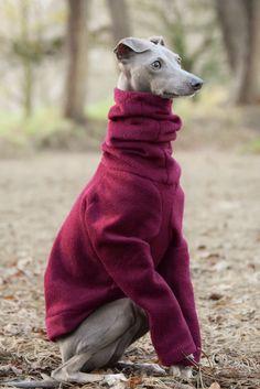 Raglan sleeve jumper by LOKO Pet Apparel. http://lokopetapparel.com/product/raglan-sleeve-fleece-jumpers/