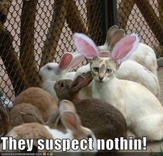 Easter Kitty - Cat memes - kitty cat humor funny joke gato chat captions feline laugh photo easter holiday humor