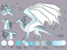 Prince Arctic Reference Sheet by Iron-Zing on DeviantArt Wings Of Fire Dragons, Got Dragons, Clay Dragon, Dragon Art, Fire Book, Black Fire, White Dragon, Art Pages, Mythical Creatures