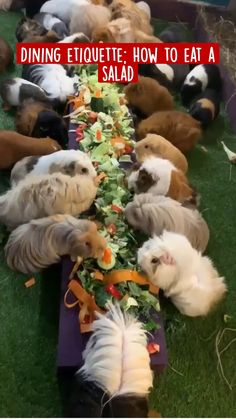 Cute Little Animals, Cute Funny Animals, Cute Dogs, Cute Animal Videos, Cute Animal Pictures, Animal Eating Plants, Pet Guinea Pigs, Guinea Pig Cages, Guinea Pig House