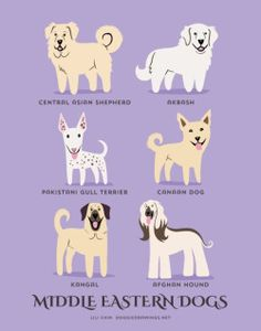 From CENTRAL & WESTERN ASIA: Akbash/Anatolian Shepherd (Turkey), Central Asian Shepherd, Pakistani Gull Terrier, Canaan Dog (Israel), Kangal (Turkey), Afghan Hound (Afghanistan).