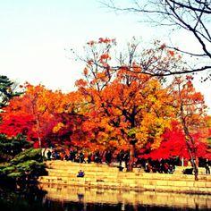 Autumn by the lake, Gyeongbokgung Palace, Seoul