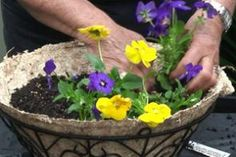 How to make gorgeous hanging baskets of flowers: great site