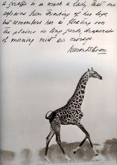 """Karen Blixen/Peter Beard - """"A giraffe is so much a lady that one refrains from thinking of her legs, but remembers her as floating over the plains in long garb, draperies of morning mist her mirage."""""""