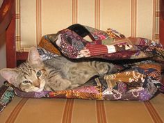 This little kitten really loves the Aerial Patchwork Backpack :) Too Cute Soul-Flower Blog