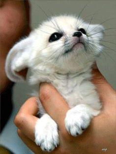 Белый зверек с черными глазками как пугвички.
