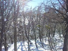 #bariloche #cerrocatedral #nieve #bosque