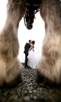 Virginia, Morais Vineyard, Vineyard Wedding, Horse, Fearless Award