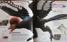 """Anchiornis (From the """"Dinosaurs!"""" book)"""