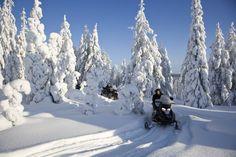 Het prachtige landschap van Levi ontdekken per sneeuwscooter.