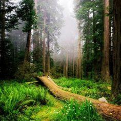 ¿Hace ruido el árbol que cae cuando no hay nadie para escucharlo?