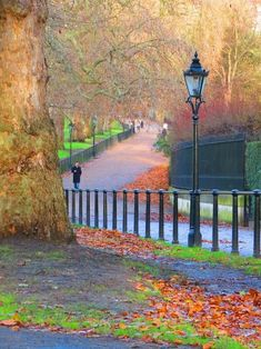 Green Park, London- Doesn't this picture just make you wish you were there, all wrapped up and strolling through the park? Heaven.