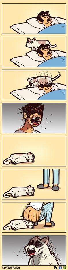 Puss by RandoWis