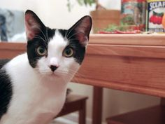 Best Christmas Gifts...adopt a pet at petfinder.com
