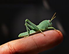 CrickeT by iliasorfanos1. @go4fotos