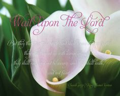 Wait Upon The Lord, Worship, Waiting, Encouragement, Words, Horse