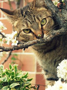Wake up and smell the.... flowers!