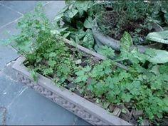 Como plantar Salsinha ou Ervas finas em uma Jardineira passo a passo