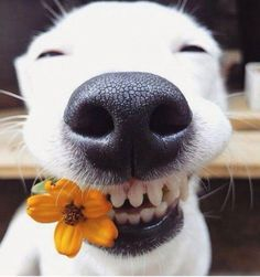 I can't even look at this happy dog's face without smiling! #cute #adorable #smile #dog #dogs