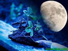 Brujiconsejo: para la luna llena de marzo