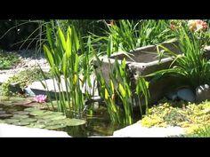 Kerti csobogó ötlet Aquarium, Plants, Goldfish Bowl, Aquarium Fish Tank, Plant, Aquarius, Planets, Fish Tank