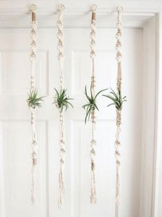 Air Plants Ideas 1723