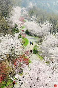 Jinhae gu South Korea 32 Outstanding Photos of Marvelous Places Around the World What A Wonderful World, Beautiful World, Beautiful Places, Daejeon, Places Around The World, Around The Worlds, Republik Korea, Places To Travel, Places To Visit