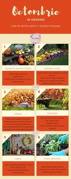 Octombrie in gradina – lista de sarcini pentru o gradina frumoasa – Ama Nicolae Lawn, Plant