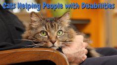 Petition · Phil Bryant: Emotional Support Animal Referendum ESAR Act · Change.org