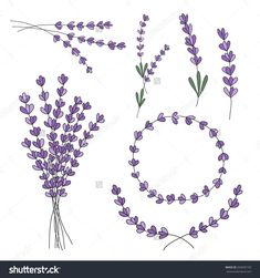 lavender drawing - Google Search #beautytatoos