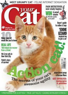 Buy Digital and Print Copies of Your Cat - Your Cat Magazine June Available on Desktop PC or Mac and iOS or Android mobile devices. Animal Magazines, Cat Magazine, Cat Shirts, Grumpy Cat, Cat Lovers, Real Life, Kitten, The Incredibles, Pets