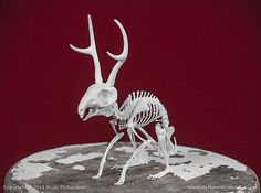 Jackalope Skeleton 3D Print Taxidermy  by MythicArticulations, $75.00