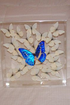 Real Gorgeous Rare and Very Seldom Offered by ButterflyArtwork, $395.00