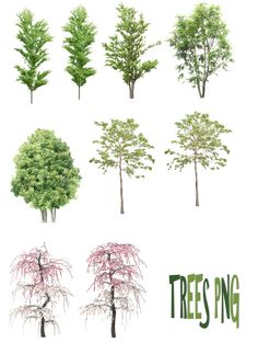 Trees png for photoshop library Landscape Architecture Drawing, Architecture Graphics, Landscape Drawings, Landscape Design, Architecture Design, Garden Design, Plants Png, Ivy Plants, Photomontage