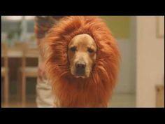 Lion Dog Amazon Prime Commercial - YouTube