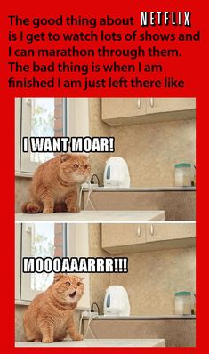 70 Ideas funny cats memes laughing so hard animal captionsYou can find Memes and more on our Ideas funny cats memes laughing so hard animal captions Humor Animal, Funny Animal Memes, Cute Funny Animals, Funny Cute, Funny Memes, Cat Memes, Freaking Hilarious, Seriously Funny, Funny Sayings