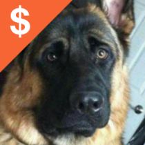 Finding Rover Alisia McIntyre lost Rex Near 2nd House Rd Montauk, NY October 1st Pet name: Navi von Highlander Gender: Male Primary breed: German Shepherd Dog Age: 2 years, 8 months www.facebook.com/BringRexHome PLEASE if you have him and don't want to return him at least let us know that he's safe, loved, & that you're giving him a great life.