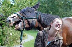 18 Hilarious Times Horses Photobombed Photos
