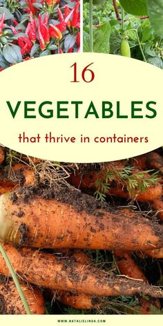 Looking to grow vegetables in pots or containers? These 16 vegetables actually thrive in containers! Check them out and start planning your vegetable garden now! # container Gardening 16 Vegetables That Thrive in Containers Growing Vegetables In Containers, Container Gardening Vegetables, Garden Container, Regrow Vegetables, Vegetables Garden, Easy Vegetables To Grow, Growing Veggies, Organic Vegetables, Herb Garden Design