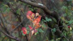 nature # 18 - Limited Edition of 1 Photograph Color Photography, Nature Photography, Original Paintings, Original Art, Realism Art, Photo Colour, Artwork Online, Buy Art, Paper Art