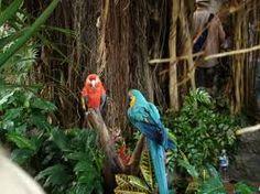Loro Parque Zoo, Tenerife, Spain