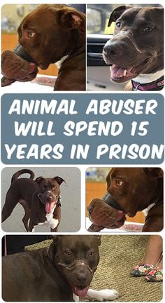 William Dodson is going to be spending the next 15 years in prison. Five of those he owes to taping his pit bull Caitlyn's mouth and nose shut for 36 hours nearly two years ago.  Read more about the story, throw this PIN