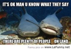Funny pictures about Shark Friendship. Oh, and cool pics about Shark Friendship. Also, Shark Friendship photos. Funny Animal Memes, Funny Animal Pictures, Funny Animals, Funny Quotes, Funny Memes, Animal Funnies, Animal Pics, Shark Pictures, Animal Captions