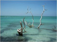 The Beach at North Captiva Island. Such a laid back and relaxing place. Can't wait till April to go....