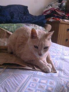 Um saco de cartao