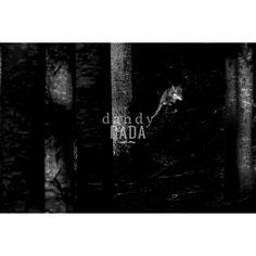 Lupo grigio. Fotografia della collezione Black and Wild di Angelo Andreoni